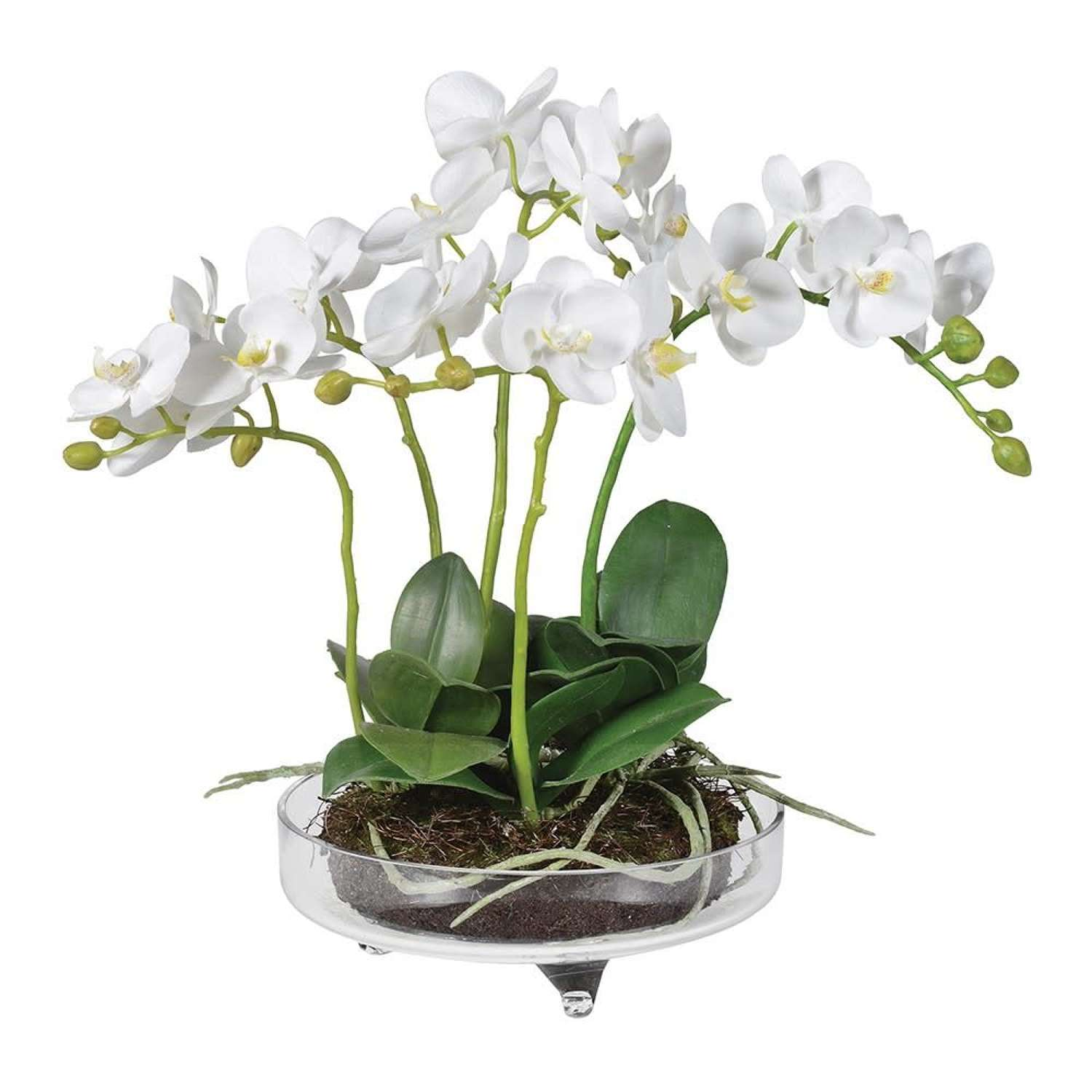 Large White Orchid In Glass Bowl With Feet