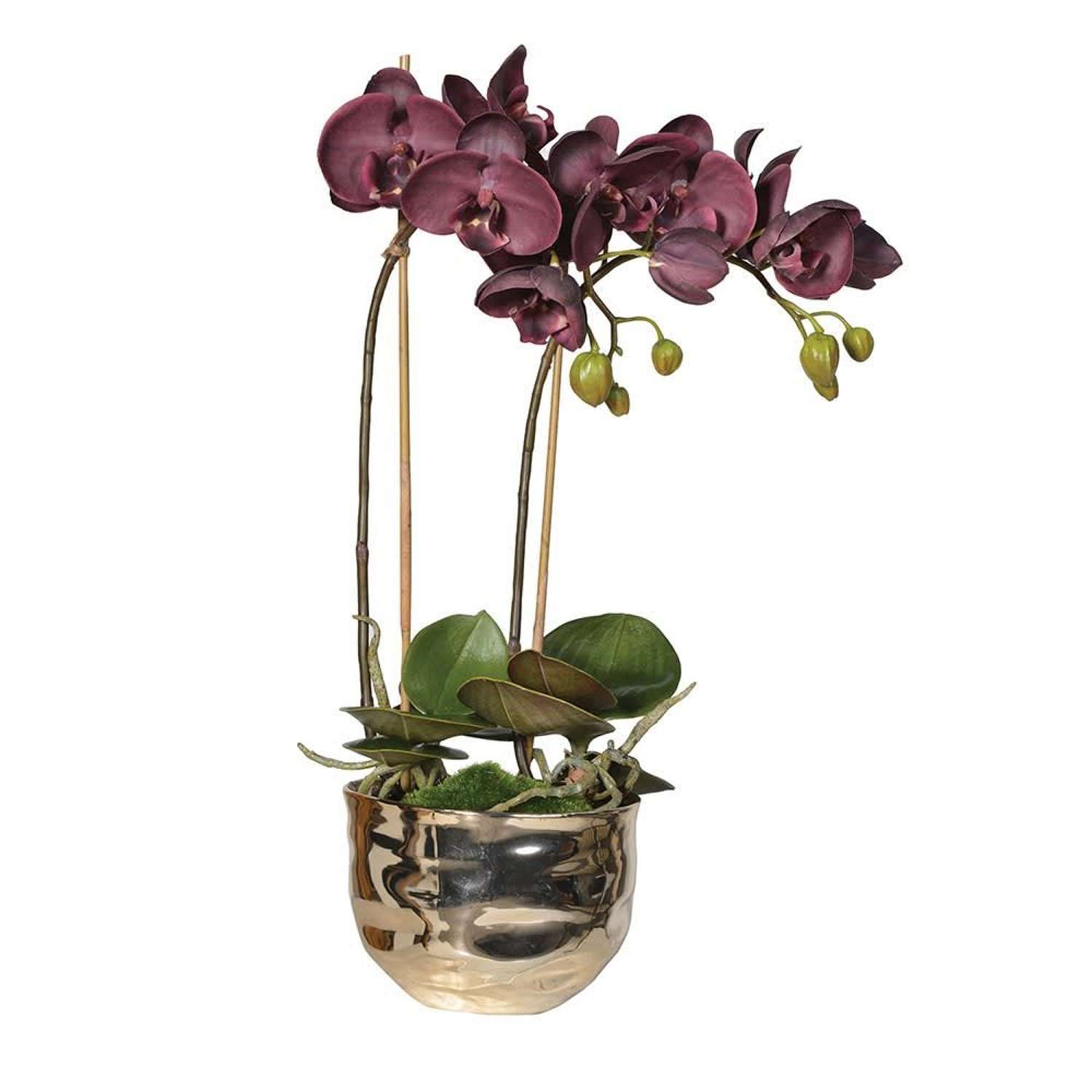 Aubergine Orchid In Gold Coloured Ceramic Pot