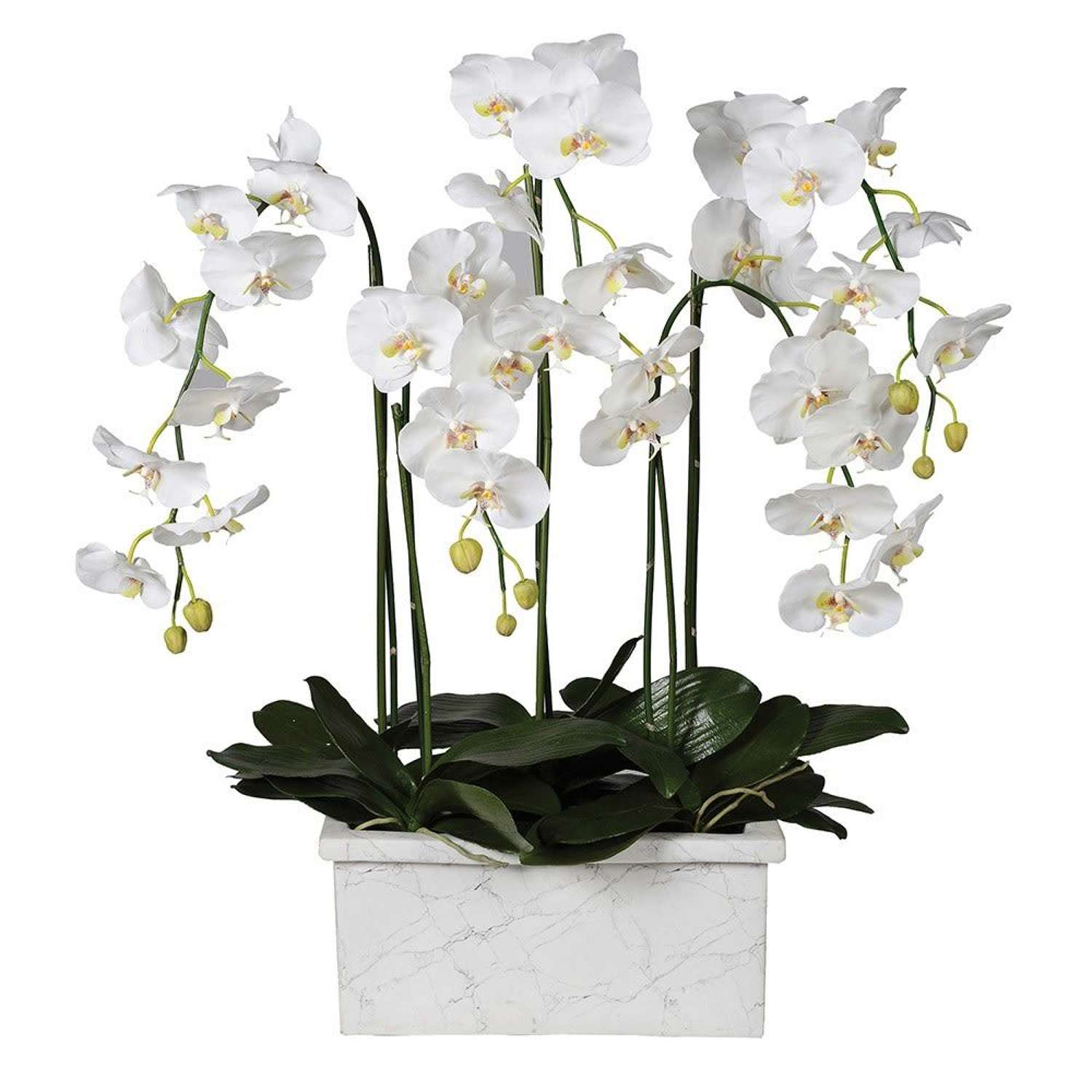 White Orchid Phalaenopsis In Marble Look Planter