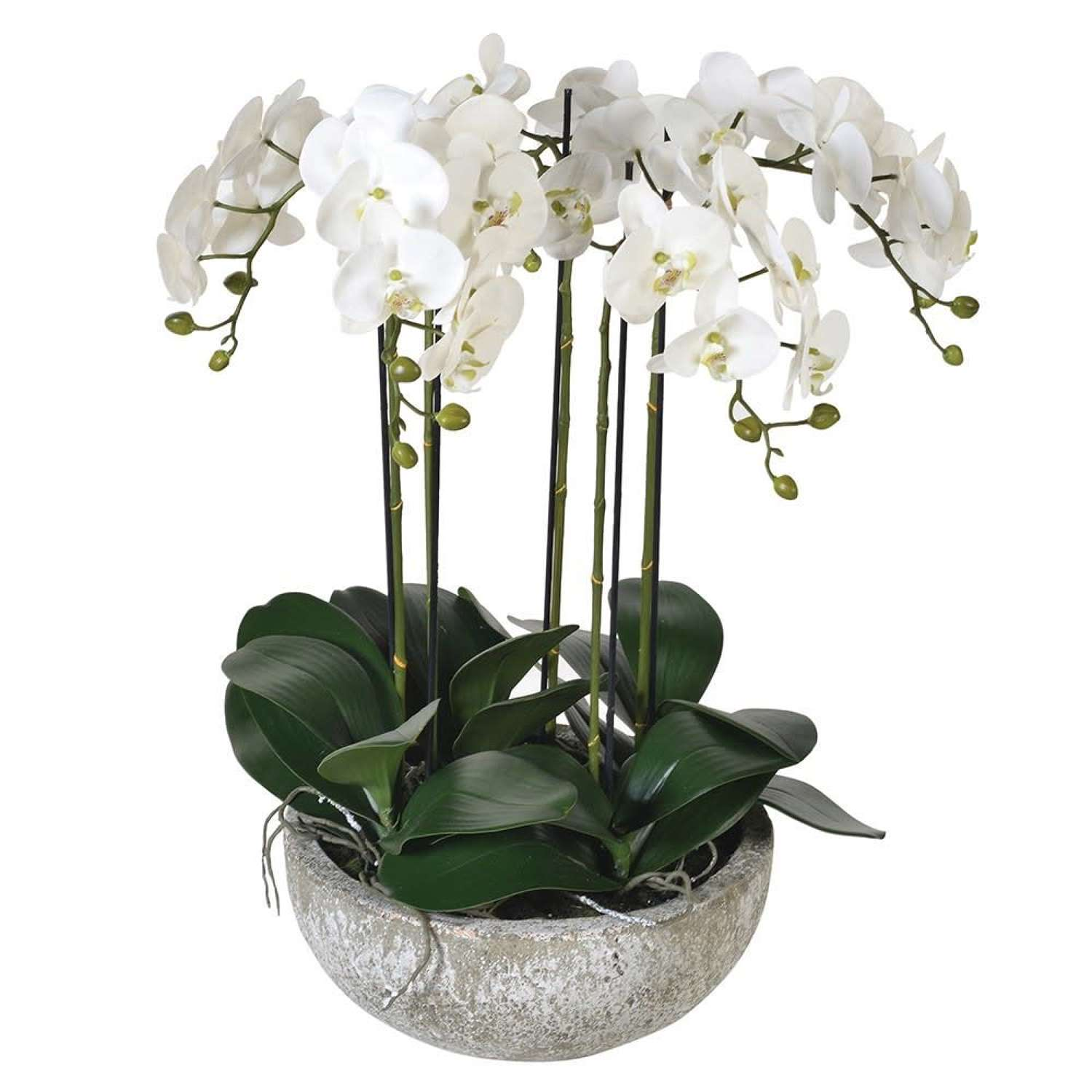 Large White Orchid Phalaenopsis In Stone Effect Bowl