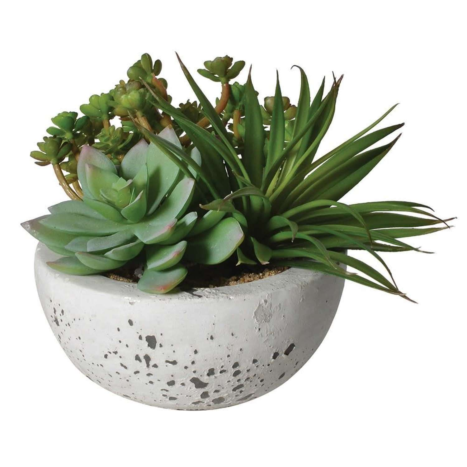 Assorted Green Suculents In Grey Cement Effect Bowl