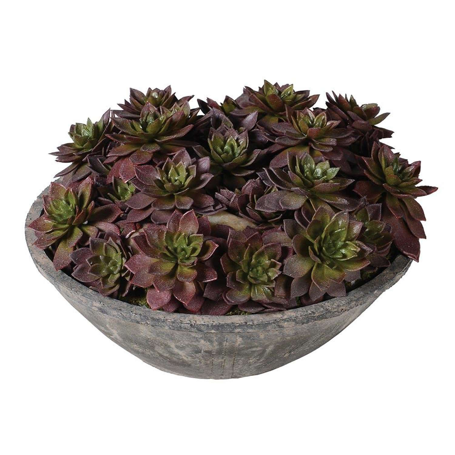 Grey Cement Bowl with Brown and Green Echeveria Plants