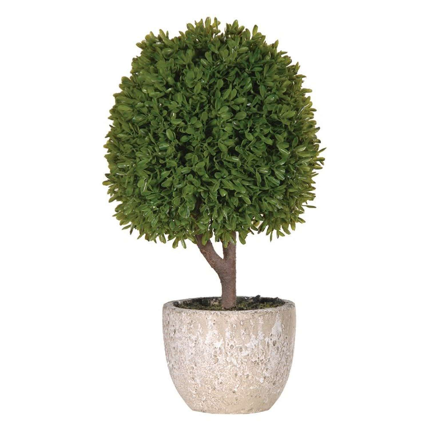 Miniature Boxwood Ball in Stone Effect Pot