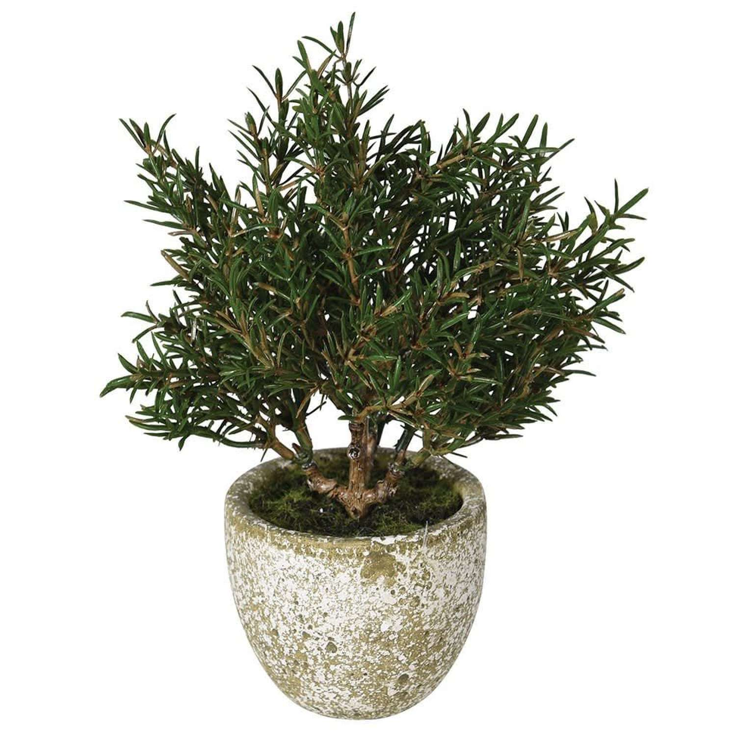 Artificial Rosemary Bush in a Clay Pot