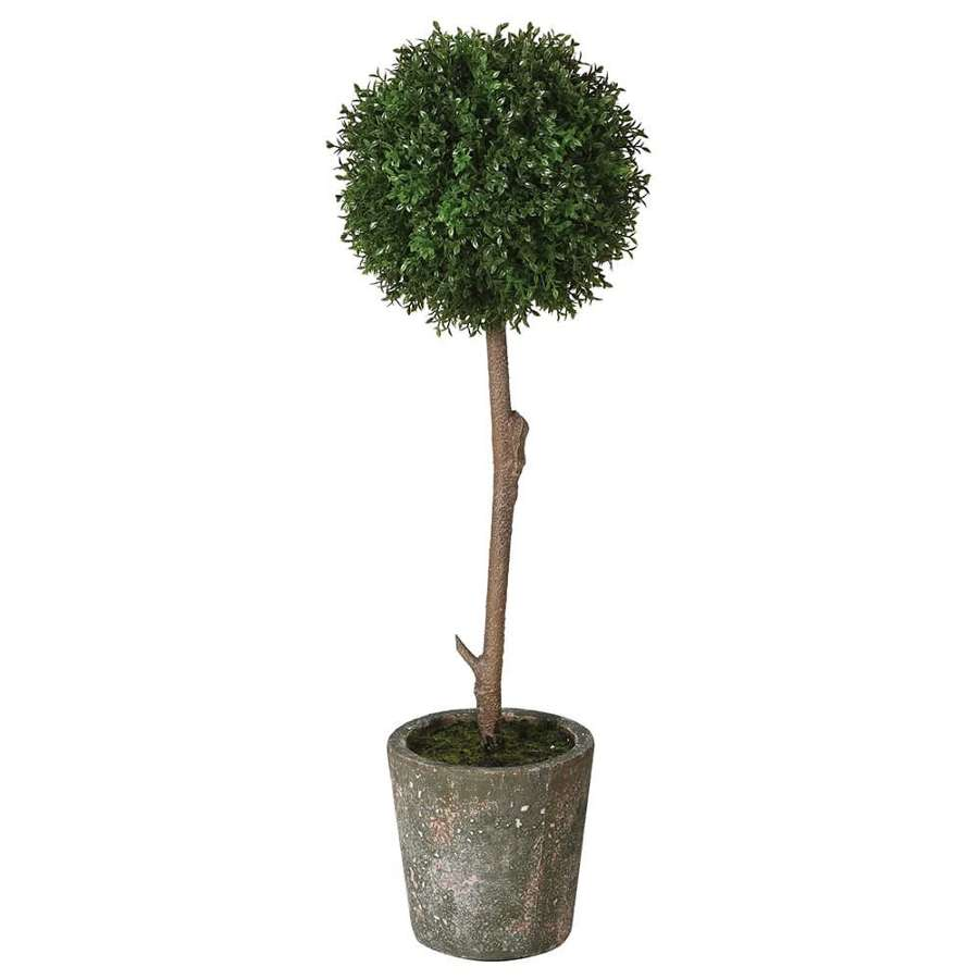 Boxwood Ball in Clay Pot - Small