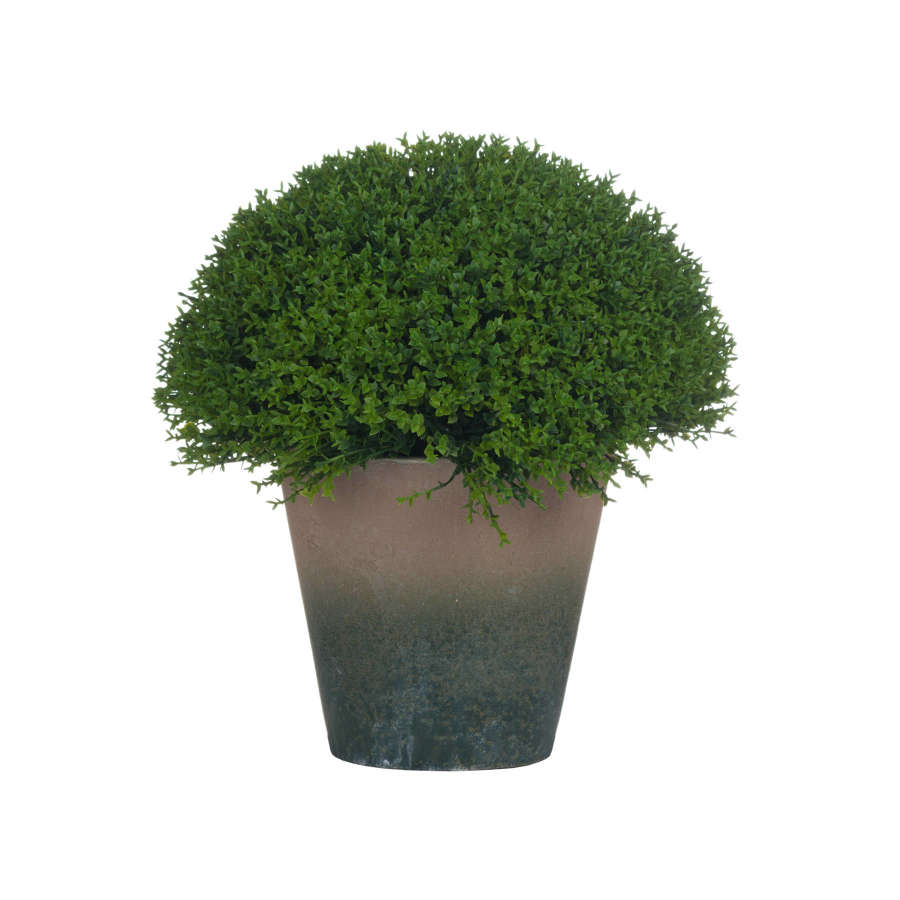 Faux Hebe Shrub in Concrete Effect Pot