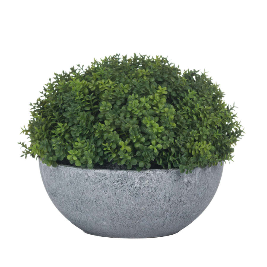 Faux Hebe Shrub in Small Concrete Effect Globe Pot