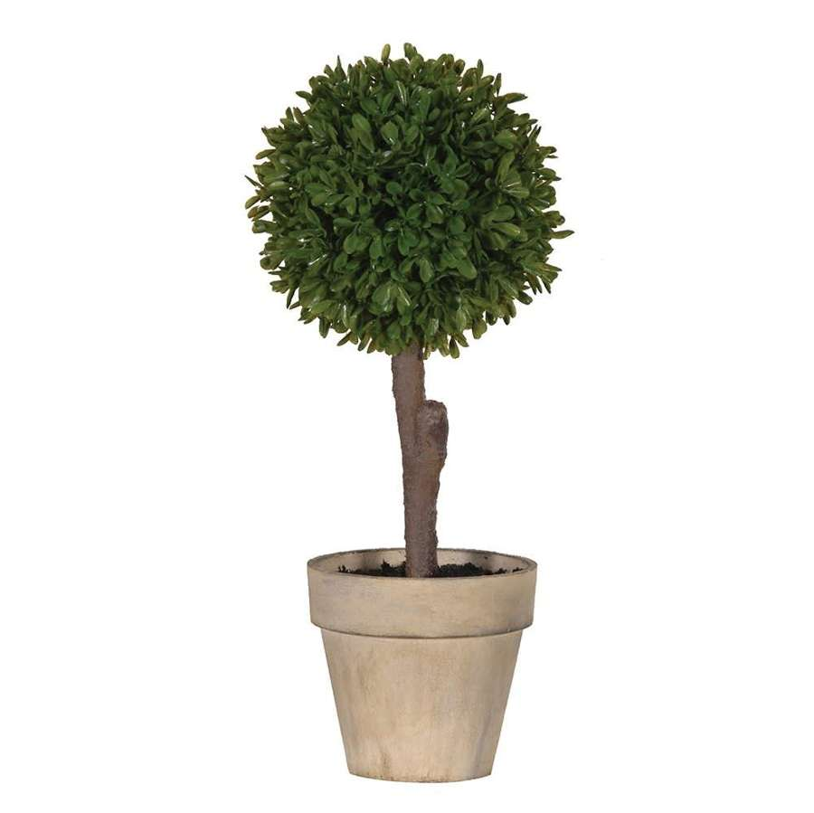 Mini Boxwood Plant in Pot