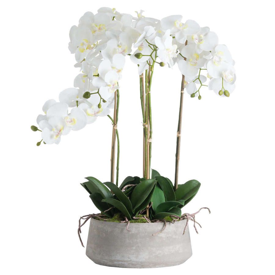 Large white orchid stone pot