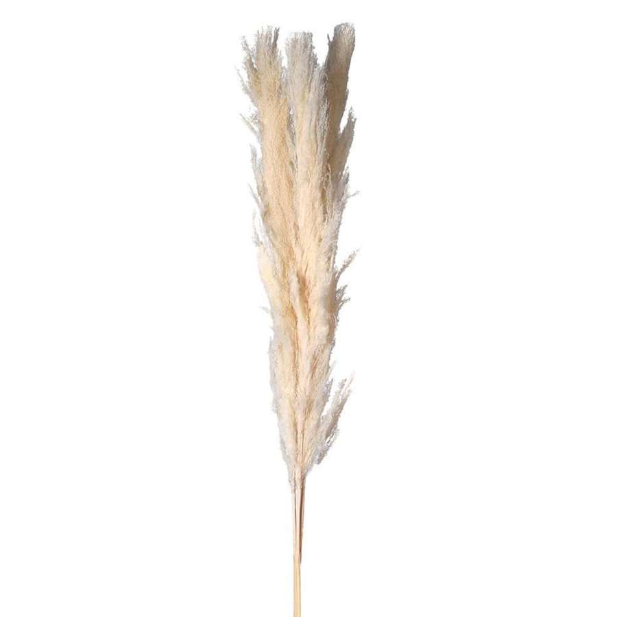 Pack of 3 Real Pampas Grass - Ivory