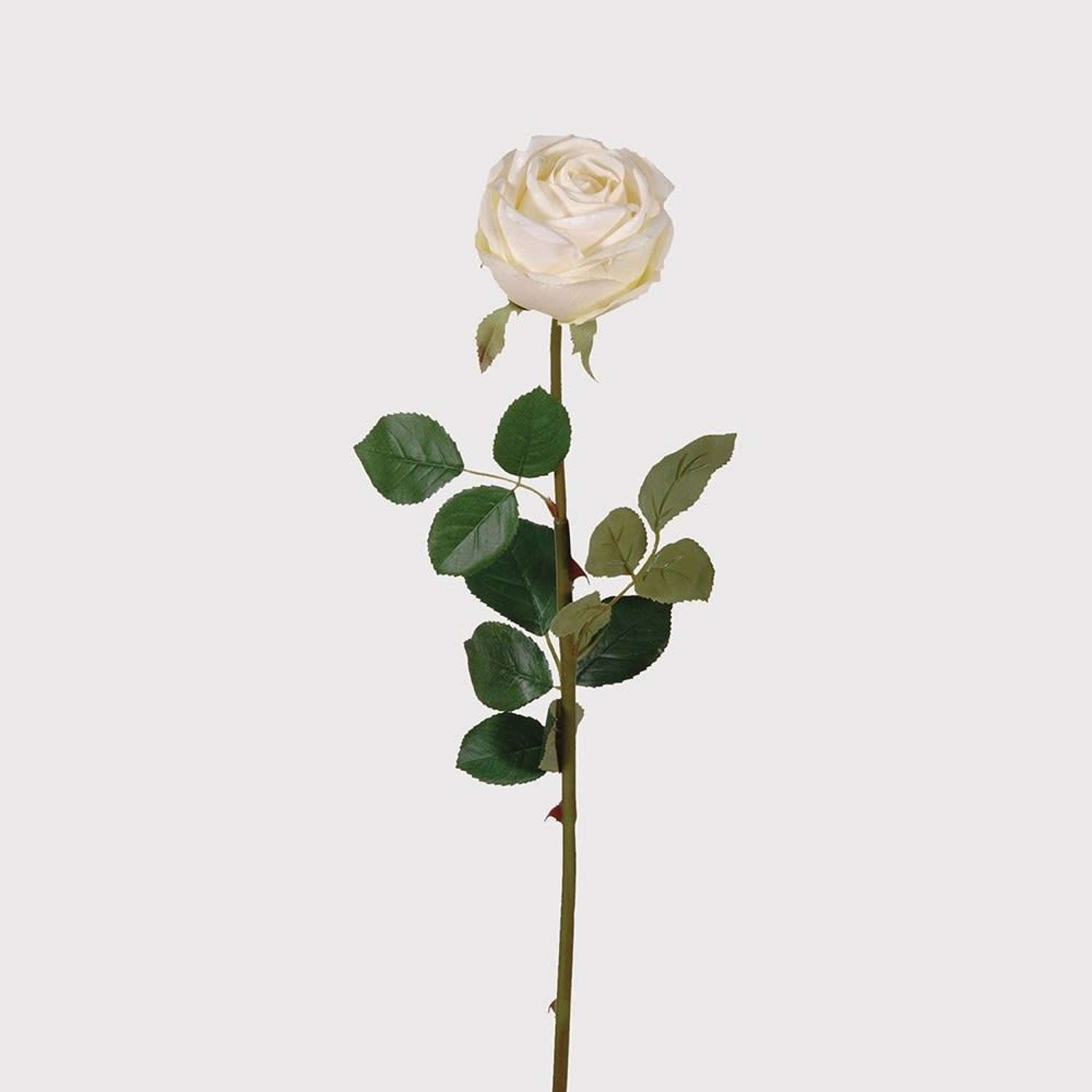 Real Look White Rose